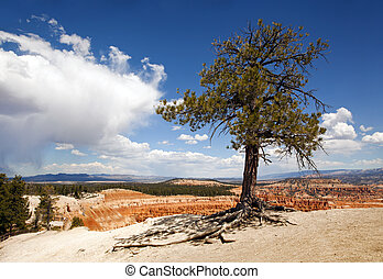 Lone tree at Bryce Canyon, Utah, USA, against dramatic sky.