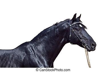 美麗, 馬, 被隔离, 黑色, 肖像, 白色