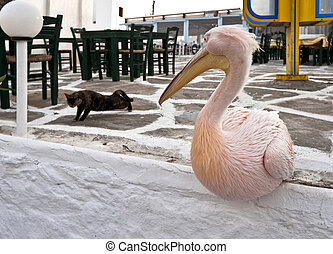 Big Pelican sitting and looking at the cat - Pelican sitting...