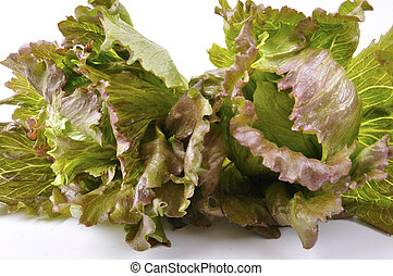 lettuce salad - Salad of lettuce green and red also called...