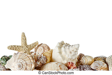 Collection of seashells isolated on a white background