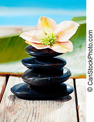 Hot Stones with a beautiful flower standing on a deck, near...