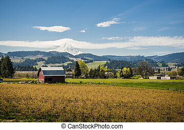 Red barn, apple orchards, Mt. Hood