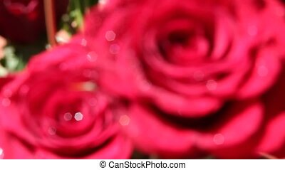 Roses, the perfect gift for a lover and a nice pastime in...