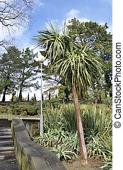 Wild yucca tree in natural surroundings in subtropical