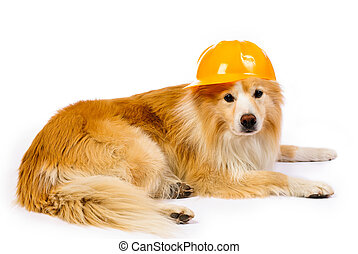 Dog with construction hard hat