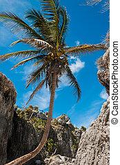 Palm tree on a Caribbean beach in Tulum Mexico