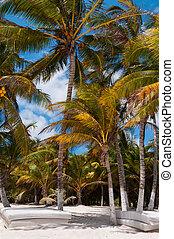 Beach beds under palm trees on Caribbean