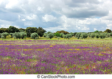 Flowers on portuguese field