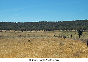 agriculture - a fence line between 2 farm paddocks