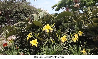Yellow lilies under blue sky on a decorative flowerbed