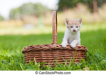 Two little cats in wicker basket - Two little cats in wicker...