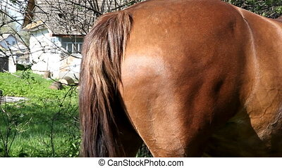 horse tail wags