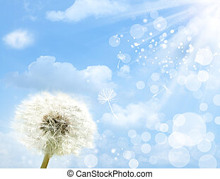 dandelion flower against summer skies and sun beam, abstract backgrounds