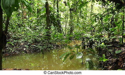 Flooded rainforest near a rising ri - in the Ecuadorian...