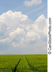 field of wheet in front of clouds