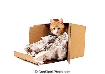雄貓, 紙板