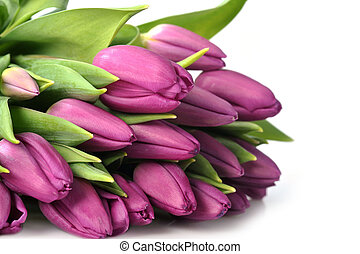 violet tulips - bouquet of many beautiful violet tulips