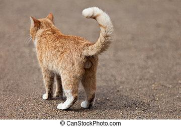 Cat animal