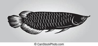 Arowana - Dragon arowana fish in black silhouette