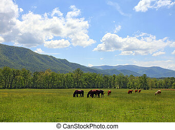 Horses grazing - Wild horses grazing with mountains in the...