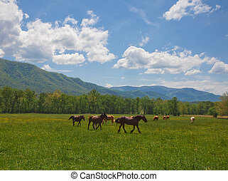 Horses and mountains - Horses grazing in the field with...