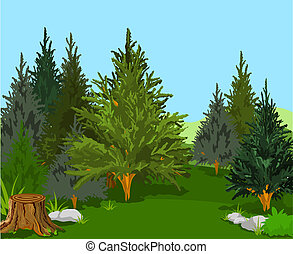 Forest Landscape - A Green Forest Landscape with Pine Trees...