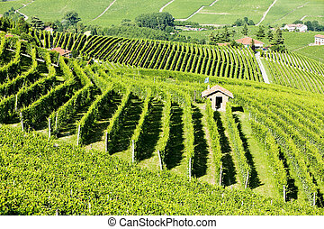 vineyars near Barolo, Piedmont, Italy