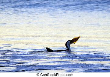 -, Tierwelt,  Cormorant, Vogel, Natur