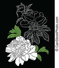 white peony on black background