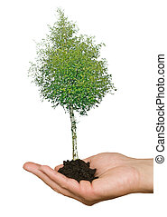 Tree in hand as a symbol of nature potection