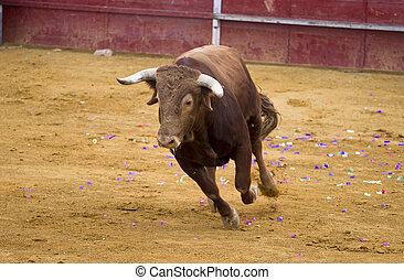Brown bull attacking Spanish bullfighter