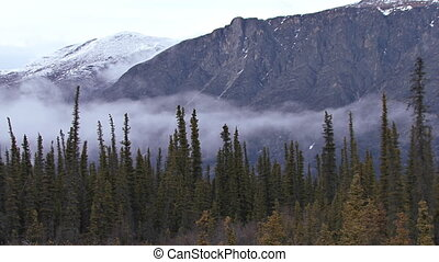 Misty Mountain Yukon Forest TL - Low clouds and heavy mist...