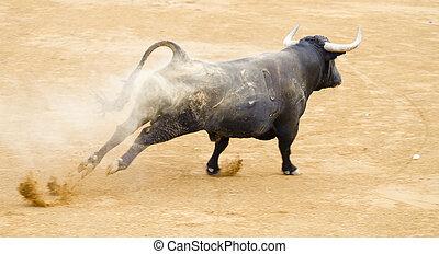 Black bull in the spanish bullfighting arena - Black bull in...