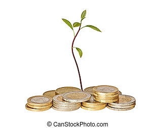 avocado seedling growing from pile of coins