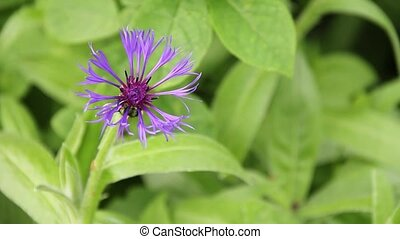 Strange Purple Flower - Strange purple flower swaying...