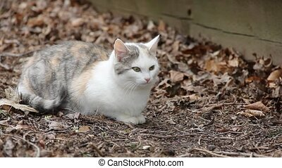 Feral Kitty - Feral kitty (about 5-6 months old, dilute...