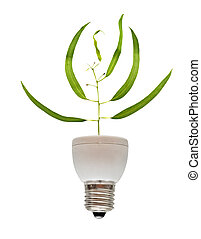 Tree seedling growing from base of fluorescent lamp