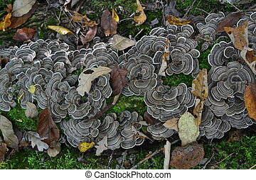 striped fungus in autumn