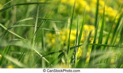 Fresh grass macro background - Macro view of fresh green...