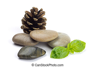 Natural shiny pebbles with a cone and green leaves