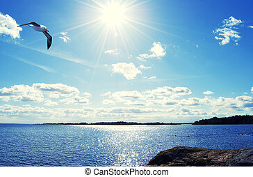 Bird in the sky - Seagull floating in the sea landscape,...
