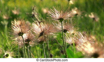 Wild meadow flowers - Macro view of wild flowers in meadow...