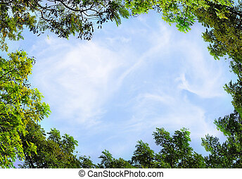 leaf and trees and blue sky background