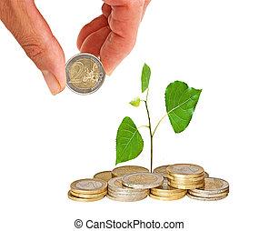 árvore, crescendo, moedas