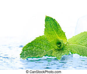 Freshness mint - Freshness twig of mint with ice and...
