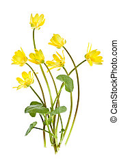 Yellow spring wild flowers - Yellow Lesser Celandine flowers...