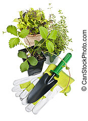 Gardening tools and plants - Plants and seedlings in pots...