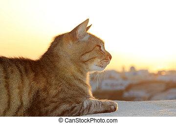 Cat at sunset in Oia Santorini