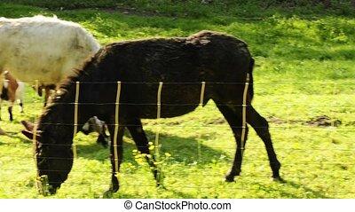 donkey on a pasture